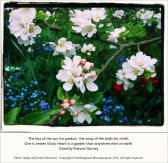 Apple and Cherry Blossoms - Nothingtosee Movealongnow