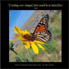Butterfly - Contessa Brown