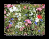 Southchurch Park WIldflower Meadow - Nothingtosee Movealongnow