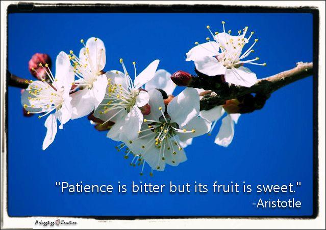 2.43 Patience fruit bitter sweet Aristotle