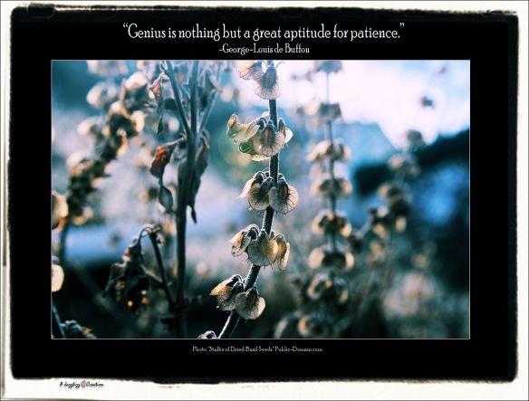 Gems 2.41 Patience Genius George-Louis de Buffon