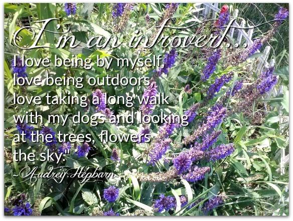 Flower Aubrey Hepburn Diana's Flowers