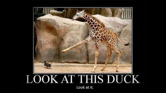 this giraffe is following a duck